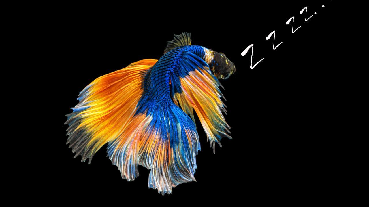 Do betta fish sleep